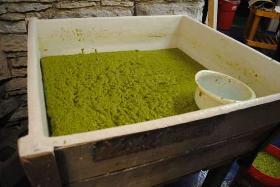 Pulp Vat. Looks like Pea Soup!