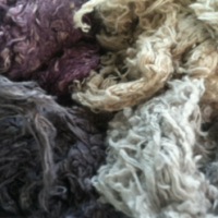 Natural Dyes and Papermaking